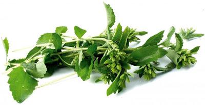https://joseppamies.files.wordpress.com/2010/02/5769f-stevia-planta-del-sucre-10.jpg?w=786&h=405