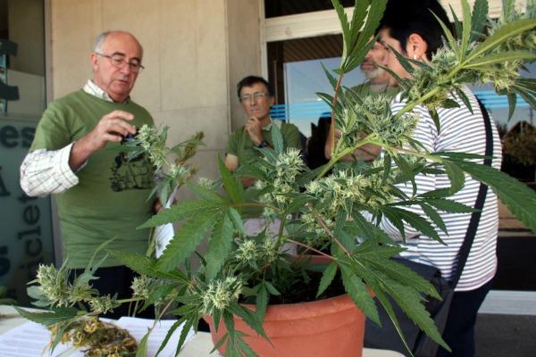 Josep Pàmies, de l'associació Dolça Revolució, acompanyat d'altres activistes, explicant a una senyora els beneficis terapèutics de la marihuana, a les portes de l'Hospital Arnau de Vilanova, el 30 d'octubre de 2015. (Horitzontal)